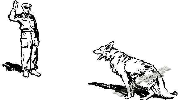 Жест рукой для обучения щенка команде сидеть