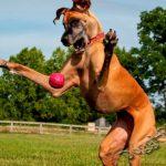 5 мифов о собаках