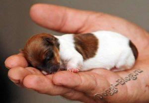 Начало жизни щенка