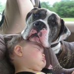 Смешные фото собак и детей 10