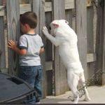 Смешные фото собак и детей 9