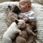 Смешные фото собак и детей 8