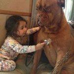 Смешные фото собак и детей 6