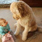 Смешные фото собак и детей 5