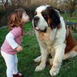 Смешные фото собак и детей 4