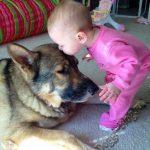 Смешные фото собак и детей 2