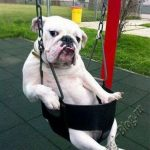Смешные фото собак 4