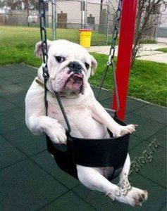 Смешные картинки собак, фото собак, прикольные собаки