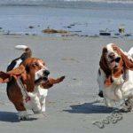 Смешные фото собак 5
