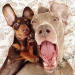 Смешные фото собак 7
