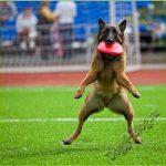Смешные фото собак 9