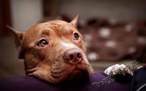 Как организовать жизнь щенка в доме