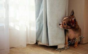 Как держать собаку в городской квартире